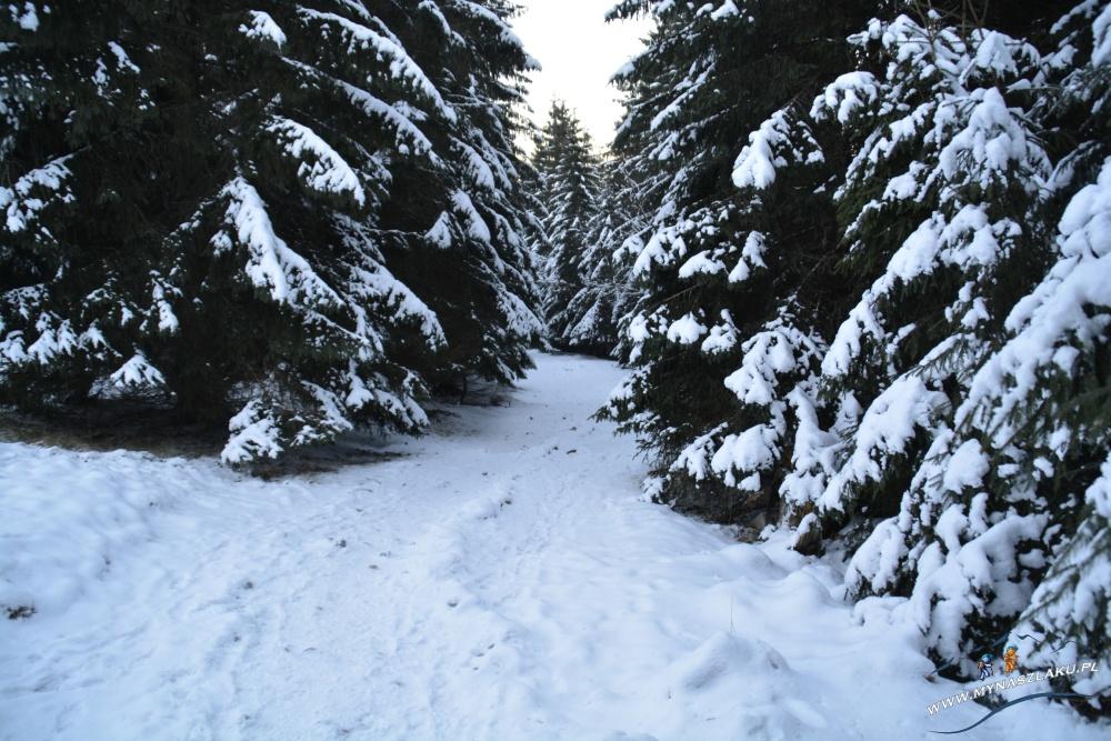 Ośnieżony szlak na Kasprowy Wierch