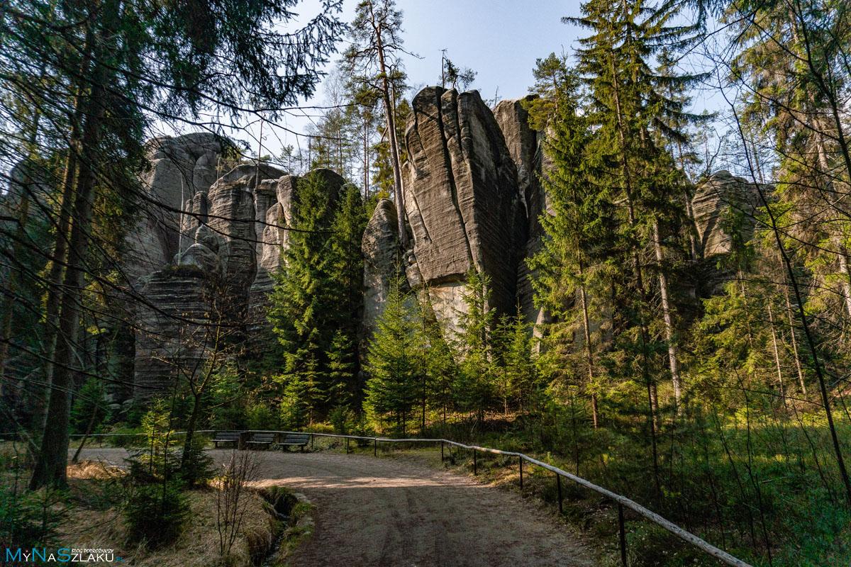 Las w czeskim Adrspach