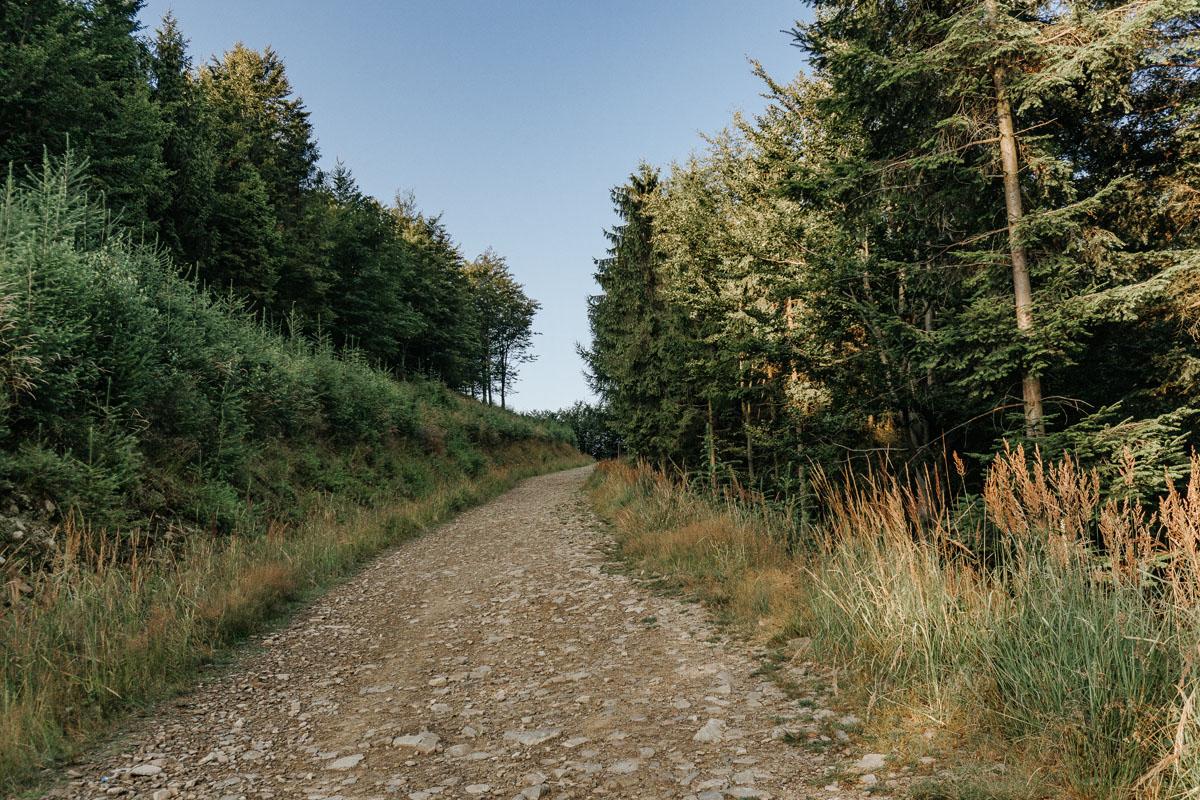Z Przełęczy Przegibek do Schroniska na Magurce Wilkowickiej