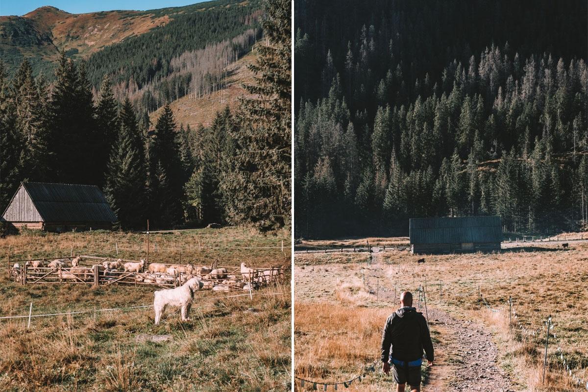 Dolina Chochołowska jak dojechać