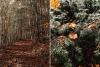 jesien-w-bieszczadach