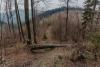dzikowiec-wieza-widokowa-04-19-0010