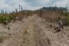 dzikowiec-wieza-widokowa-04-19-0015