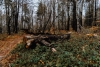 piekny-krajobraz-magurskiego-parku-narodowego