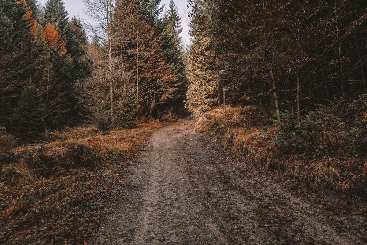 Grota Komonieckiego ścieżka żółta