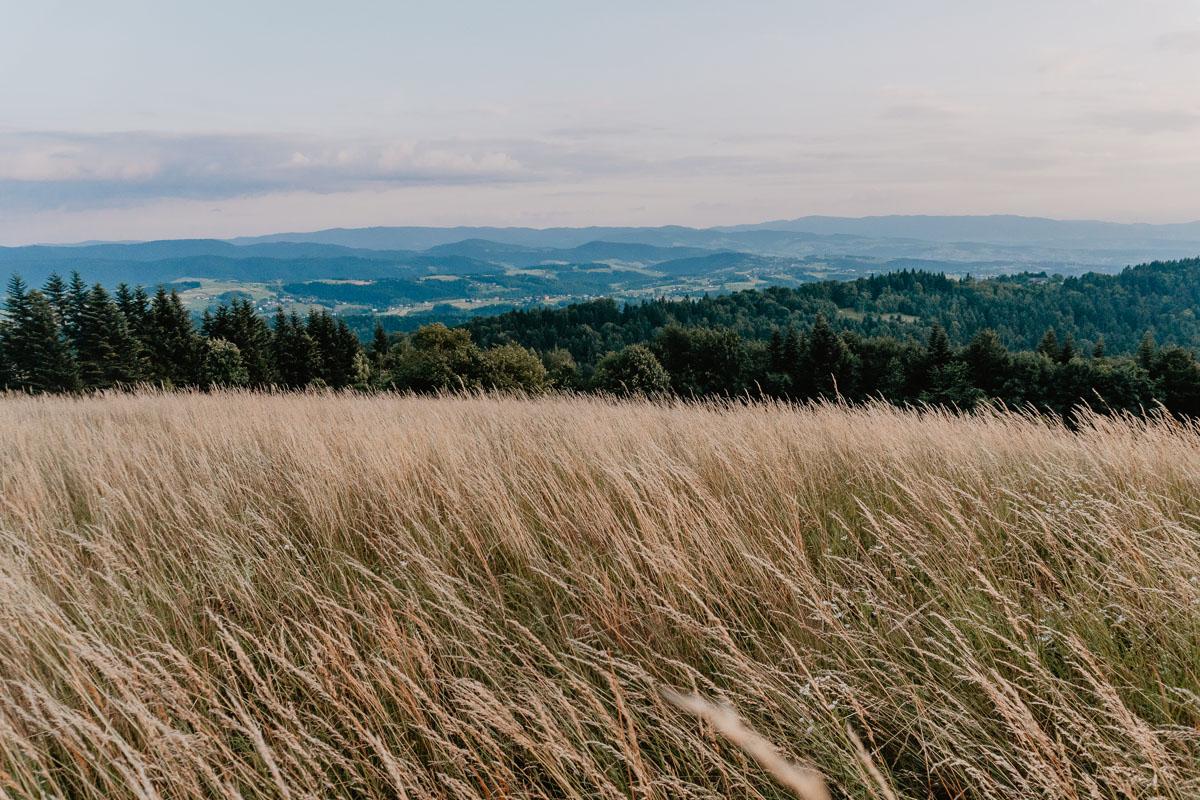 Rezerwat Cisy w Mogilnie