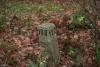 Kiełków, Góry Świętokrzyskie, Korona Gór Świętokrzyskich