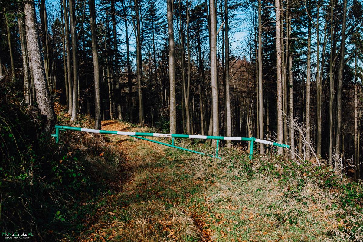 Piękna trasa w Beskidzie Sądeckim   Niemcowa i Wielki Rogacz