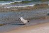 Morze-Baltyckie-plaza-miedzyzdroje-05-19-0009