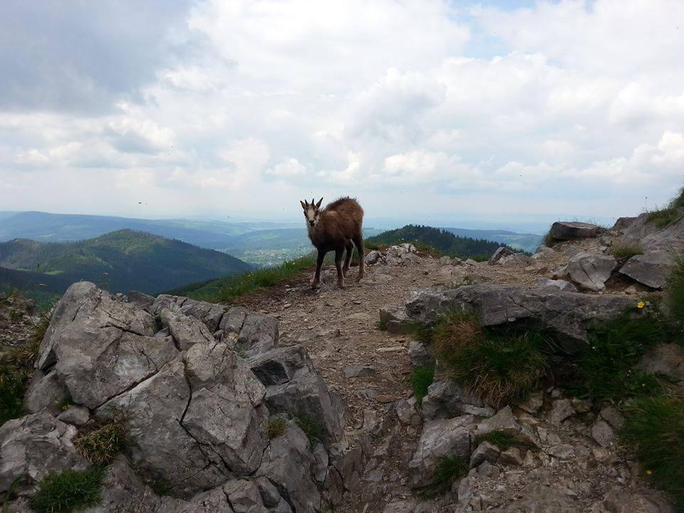 """""""Cześć! Jak Ci na imię?"""" - zawieramy nowe znajomości schodząc z Giewontu na Przełęcz w Grzybowcu :) fot. Barbara Bajko"""