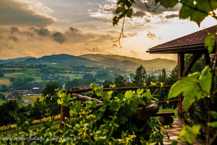 Odkrywamy Polskę: Winnica Nowizny – spokojne miejsce z wielkim potencjałem. Degustacja wina, hodowla danieli i park linowy