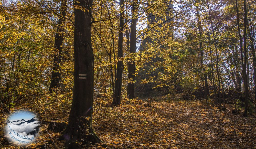 Wzgórza Włodzickie: Grodziszcze i ruiny wieży widokowej