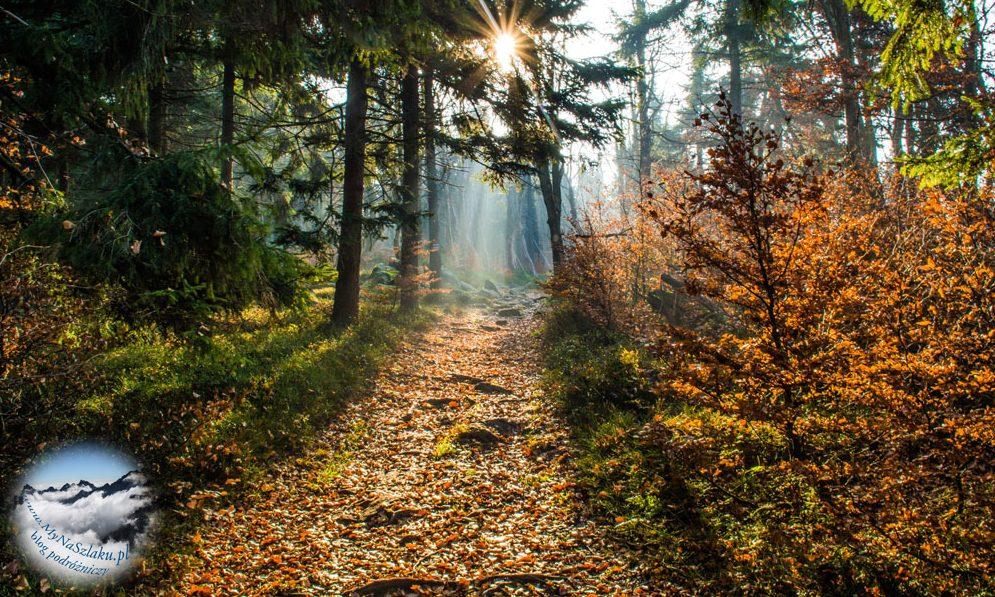 Góry Sowie: Wieża widokowa na Kalenicy, Słoneczna i Rymarz