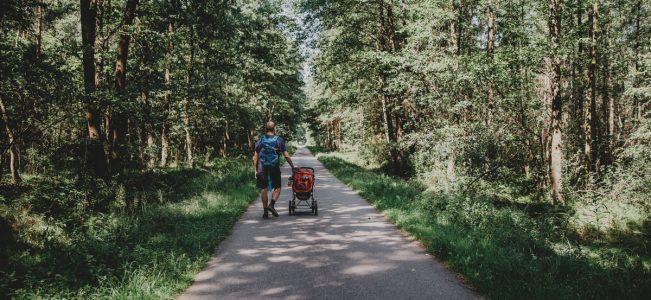 Puszcza Niepołomicka dobra na spacery, rowery i coś jeszcze