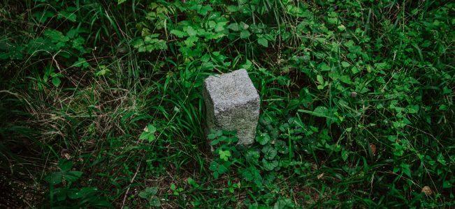 Roztocze | Najwyższy szczyt województwa lubelskiego – Krągły Goraj