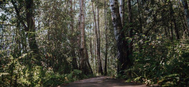 """Poleski Park Narodowy: Ścieżka przyrodnicza """"Spławy"""""""
