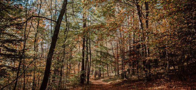 Pogórze Wiśnickie: Iwkowa – Dominiczna Góra – Iwkowa