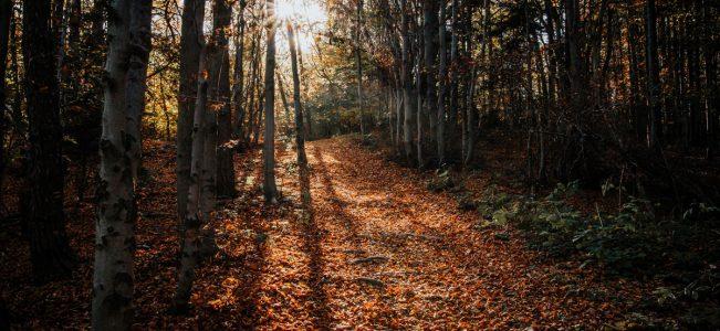 Na jesiennym szlaku w Beskidzie Wyspowym | Kamionna i Pasierbiecka Góra