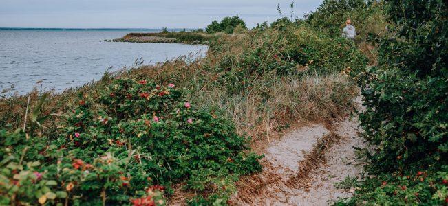 """Ścieżka przyrodnicza """"Torfowe Kłyle"""" w Jastarni"""