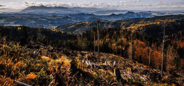 Wymarzona środa na szlaku | Niemcowa, Wielki Rogacz, Przełęcz Żłobki i wspaniałe widoki na Tatry