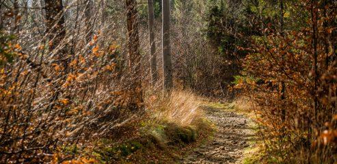 Beskid Śląski: Z Ustronia przez Przełęcz Beskidek na Równicę