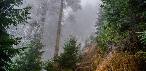 Skrzyczne – najwyższy szczyt Beskidu Śląskiego | wyjście ze Szczyrku