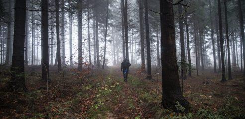 Korona Gór Świętokrzyskich: Kiełków