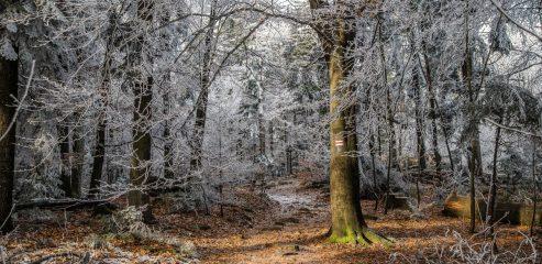 Korona Gór Świętokrzyskich: Łysica