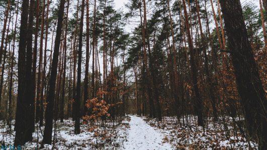 Pierwszy raz w Kampinoskim Parku Narodowym i na Głównym Szlaku Puszczy Kampinoskiej