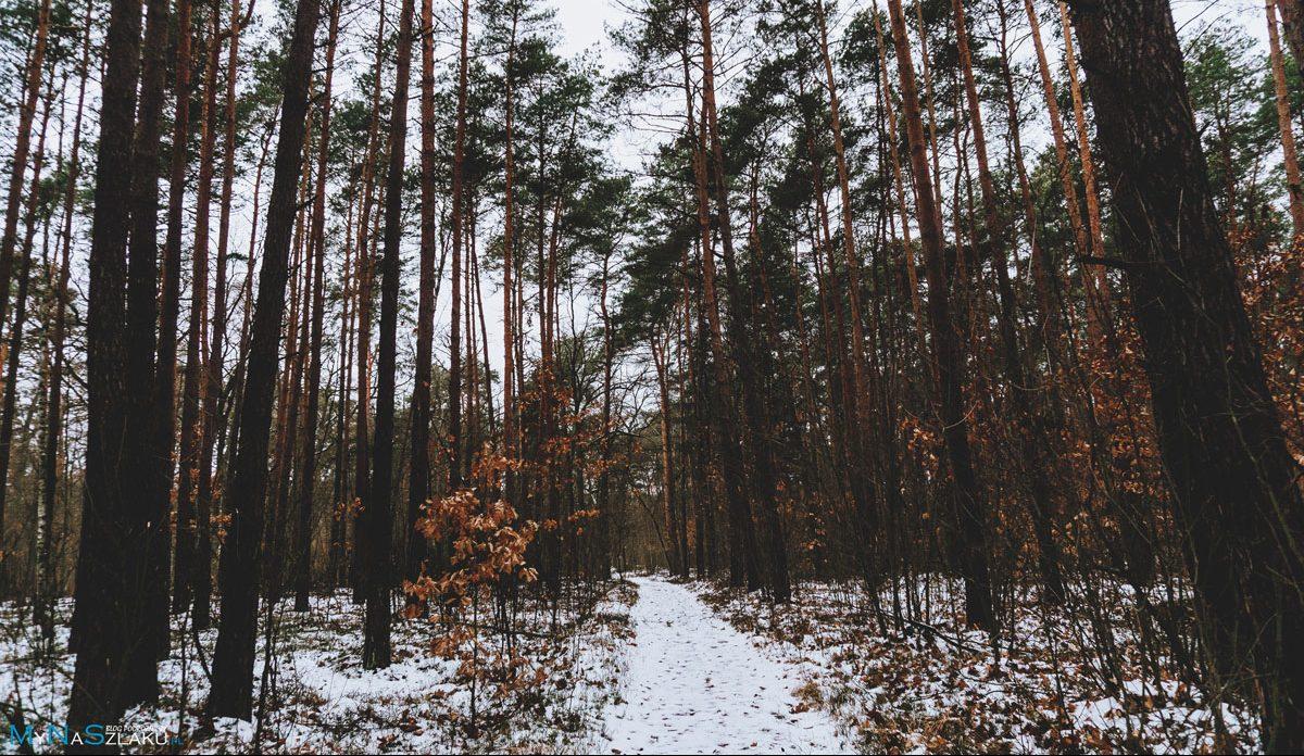 Kampinoski Park Narodowy i Główny Szlak Puszczy Kampinoskiej