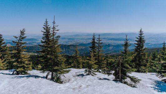 Wycieczka z Opawy na Łysocinę i kolejny szczyt do Sudeckiego Włóczykija