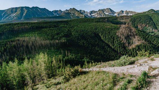 Łatwy i piękny szlak z Toporowej Cyrhli na Wielki Kopieniec