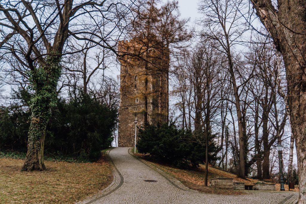 wieza piastowska w cieszynie