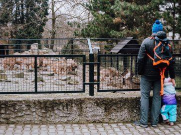 Zwiedziliśmy ZOO Kraków – dojazd, cennik, parking, mapa