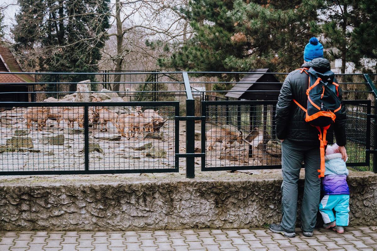 krakow zoo malopolska
