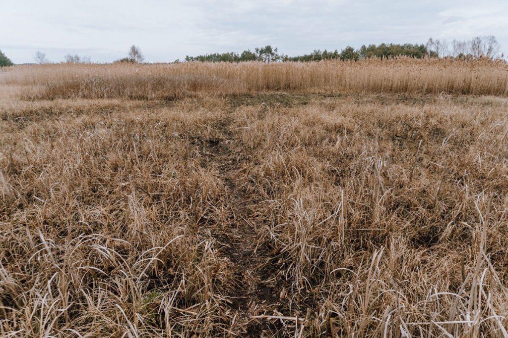 zabi staw zaleczanski park krajobrazowy