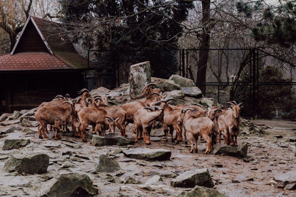zoo krakow jak zwiedzac