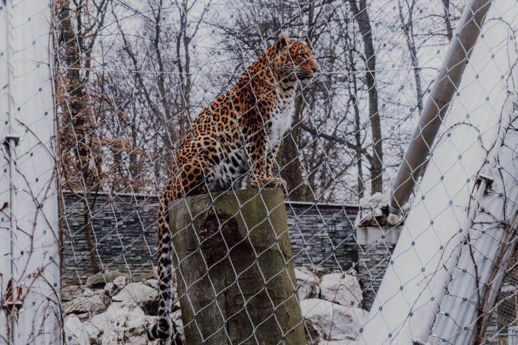 zwierzeta w krakowskim zoo
