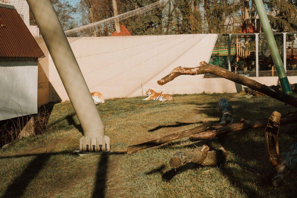 zwierzeta w lodzkim zoo