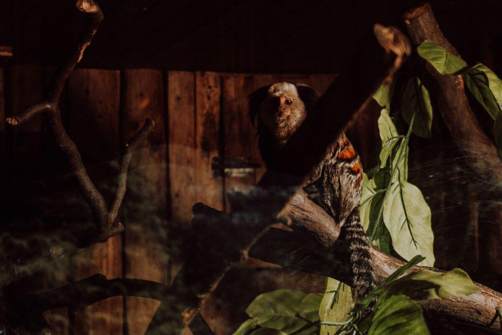 zwierzeta w zoo krakow
