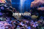 ZOO Łódź – wszystko co warto wiedzieć przed wizytą