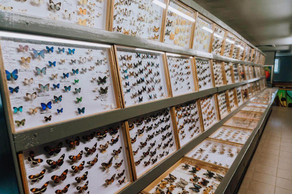 bochnia gdzie muzeum motyli
