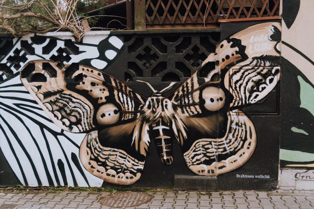 bochnia mural motyle