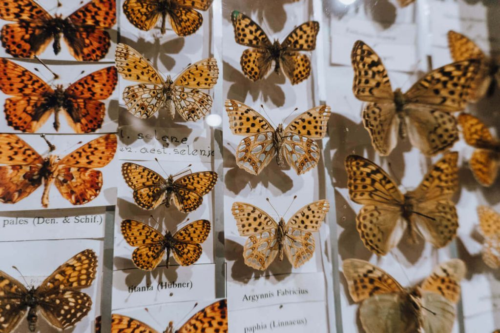 gatunki motyli w bochni