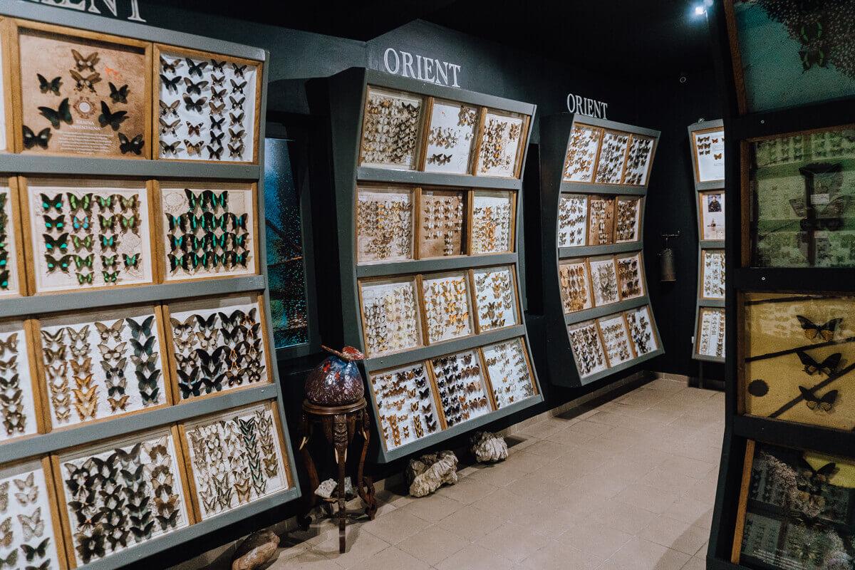 Muzeum Motyli - warto zobaczyć niedaleko Krakowa