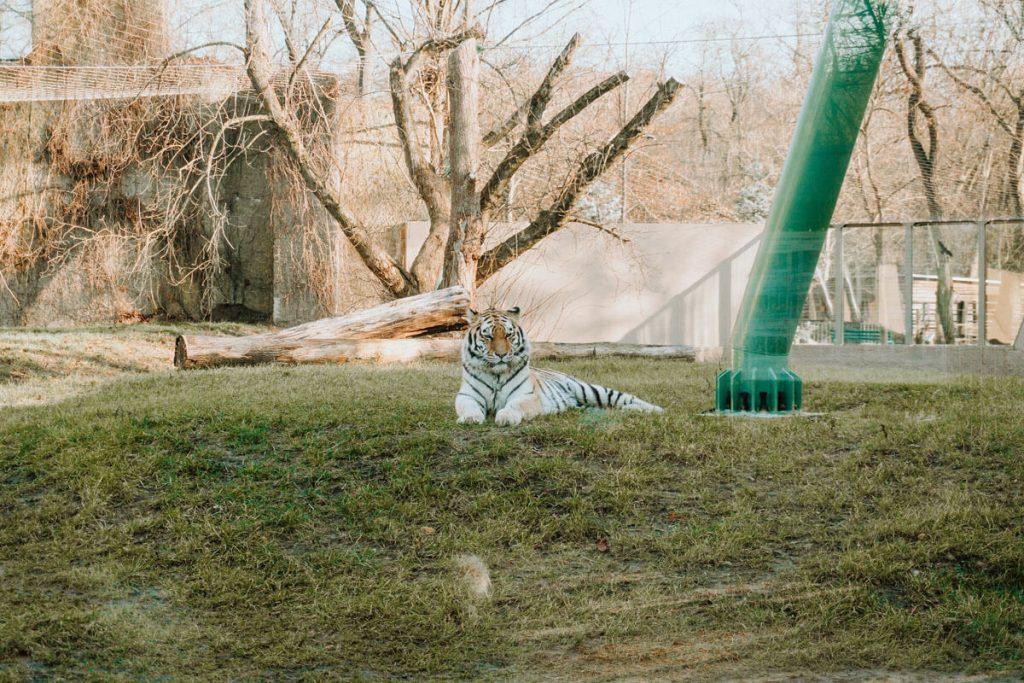 miejski ogrod zoologiczny lodz