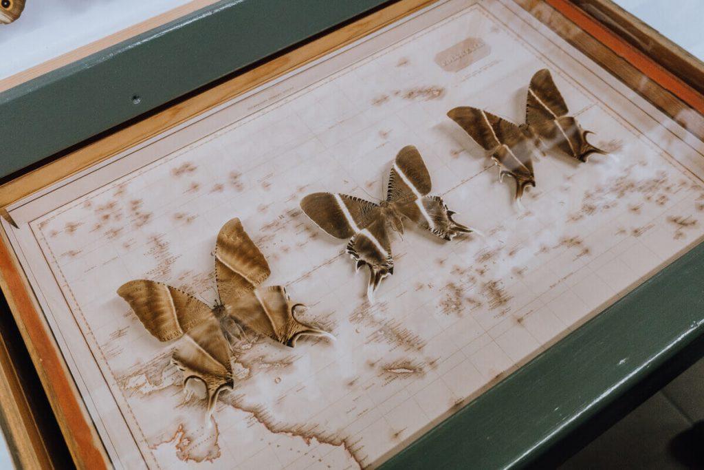 motyle w bochni