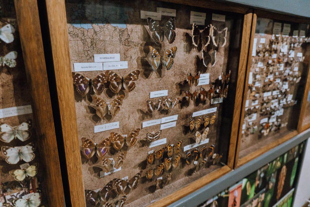 muzeum motyli w bochni zwiedzanie