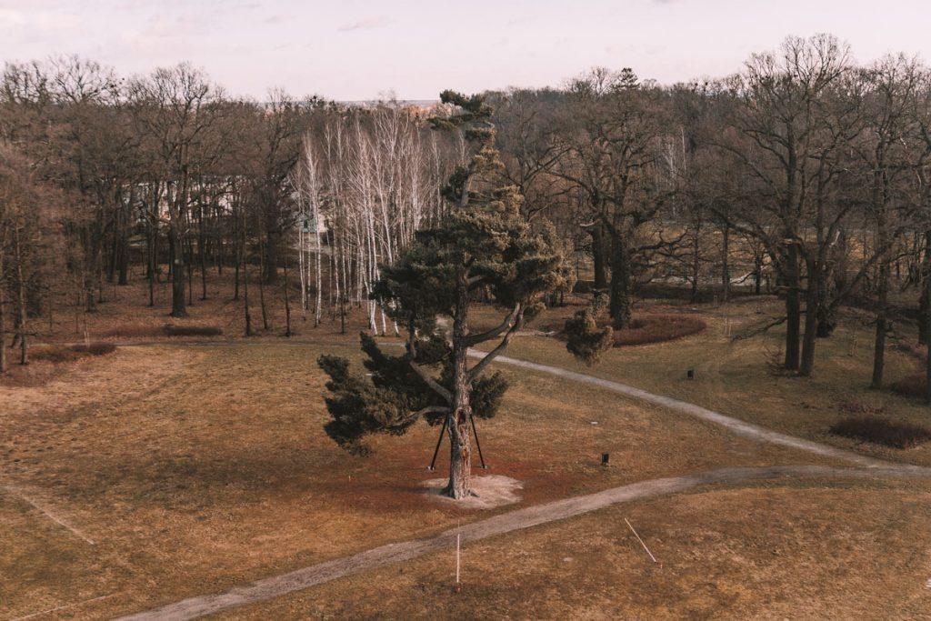 park zamek w mosznej
