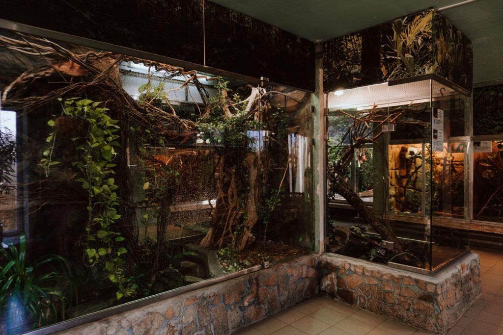 terrarium zoo lodz